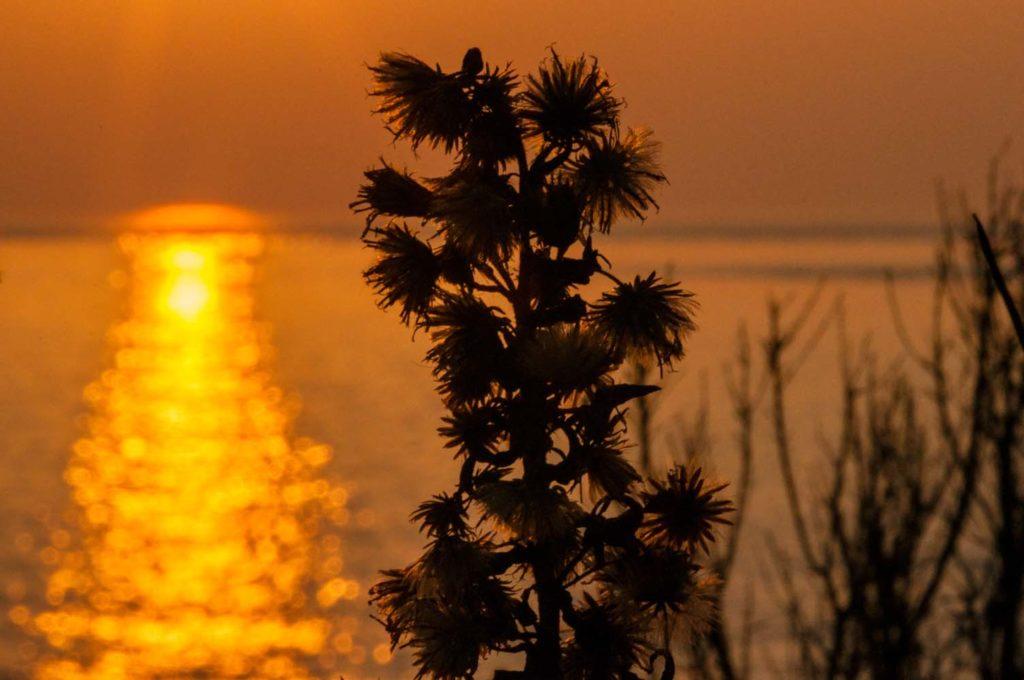 Sonnenuntergang Kamenjak