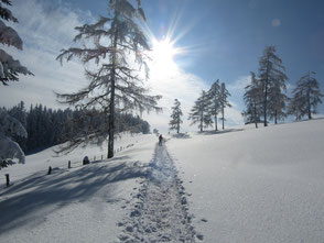 Schneeschuhwandern in die Sonne